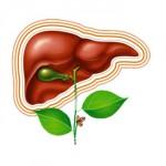 Желчегонные препараты при беременности: показания, противопоказания, побочные эффекты, перечень препаратов