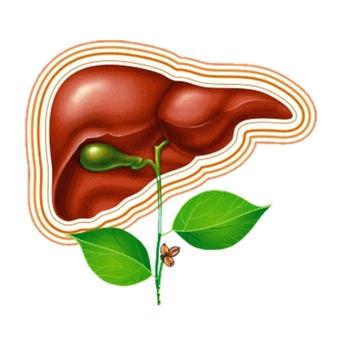 Препараты желчегонные при беременности